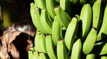 O que é a biomassa de banana verde? E como prepará-la?
