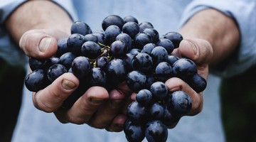 Emagrecer Uvas